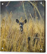 Lonely Deer In The Field Acrylic Print