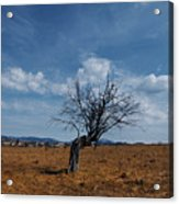 Lonely Dry Tree In A Field Acrylic Print