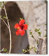 Lonely Floral Acrylic Print