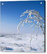 Lonely Frost  Acrylic Print