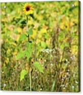 Lonely In The Wild Acrylic Print