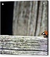 Lonely Ladybug Acrylic Print