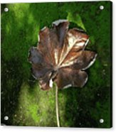 Lonely Leaf On Moss Acrylic Print