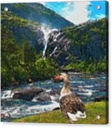 Lonely Near The Waterfall 1 Acrylic Print