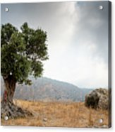 Lonely Olive Tree And Stormy Cloudy Sky Acrylic Print