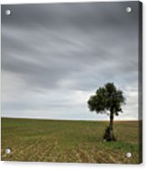 Lonely Olive Tree With Moving Clouds Acrylic Print