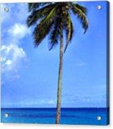 Lonely Palm Tree Los Tubos Beach Acrylic Print