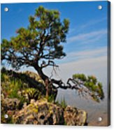Lonely Pine Acrylic Print