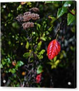 Lonely Red Leaf Acrylic Print