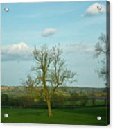 Lonely Tree Cotswold England Acrylic Print
