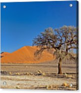 Lonely Tree In Sossusvlei Acrylic Print
