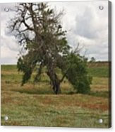 Lonely Tree In West Texas Acrylic Print