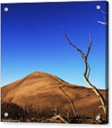 Lonely Bare Tree And Sanddunes Acrylic Print