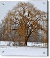 Lonely Winter Acrylic Print