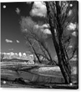 Loner Acrylic Print