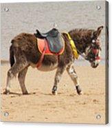 Lonesome Donkey Acrylic Print