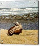 Lonesome Nguni Acrylic Print