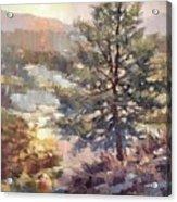 Lonesome Pine Acrylic Print