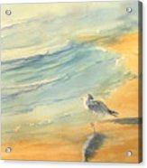 Long Beach Bird Acrylic Print