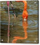Long Colors II Acrylic Print