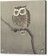 Long-eared Owl On Bare Tree Branch, Ohara Koson, 1900 - 1930 Acrylic Print