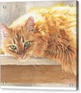Long-hair Cat Acrylic Print
