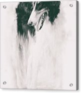 long-legged beauty Russian hound Acrylic Print