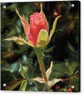 Long Stemmed Rose Acrylic Print