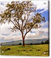 Long Tree Shenandoah Valley West Virginia  Acrylic Print