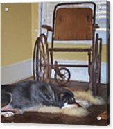 Long Wait - Dog - Wheelchair Acrylic Print