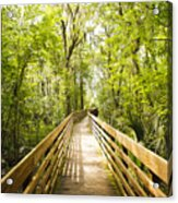 Long Walks Acrylic Print