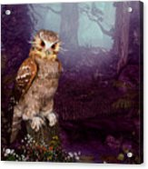 Long Whisker Owl Acrylic Print