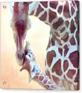 Longest Love Acrylic Print