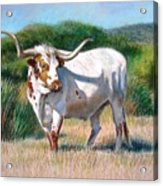 Longhorn Bull Acrylic Print