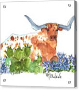 Longhorn In The Cactus And Bluebonnets Lh014 Kathleen Mcelwaine Acrylic Print