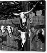 Longhorn Skulls Acrylic Print