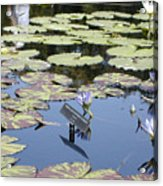 Longwood Lillies Acrylic Print by Randy Ford