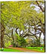 Longwood Plantation In Spring Glory Acrylic Print
