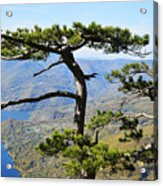 Look At The Pine Trees And The Lake Acrylic Print