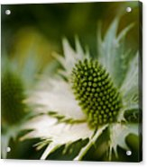 Look But Don't Touch Acrylic Print