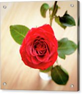 Look Down On A Rose Acrylic Print