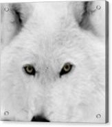 Look Into My Eyes Acrylic Print