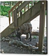 Look Who's Under The Stairs Acrylic Print