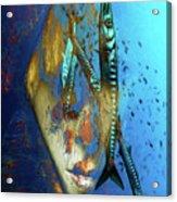 Looking At Some Barrakudas Acrylic Print