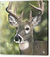 Looking Forward Acrylic Print