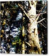 Looking Skyward Acrylic Print