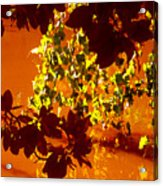 Looking Through Leaves Into Pond Acrylic Print