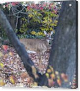 Looking Thru The Trees Acrylic Print