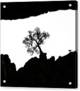 Looking Up 2 Acrylic Print