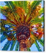 Looking Up At Palm Tree  Acrylic Print